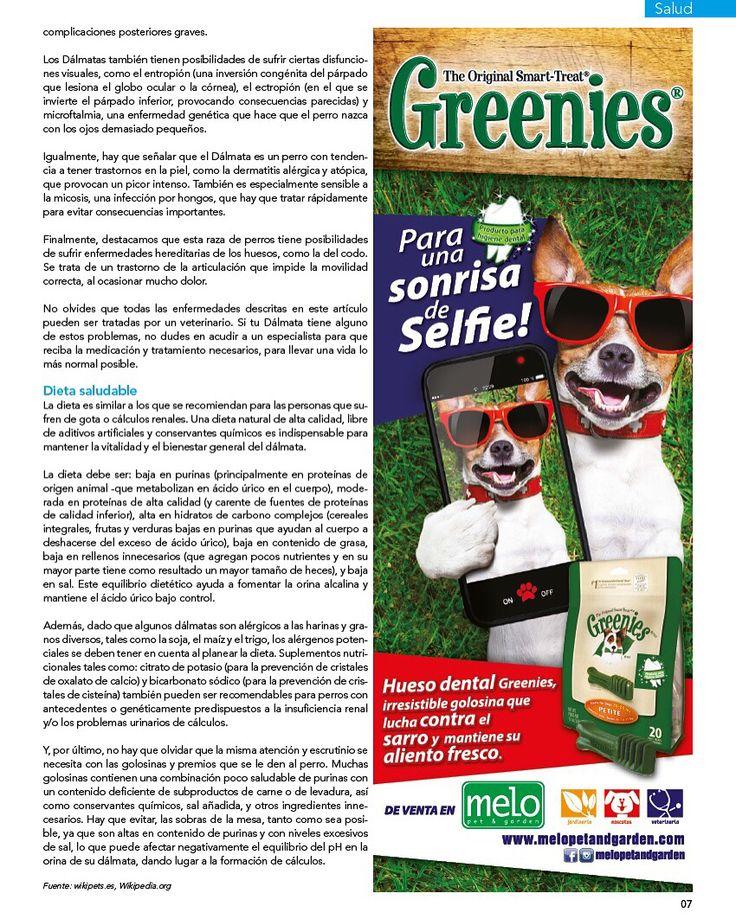 Dálmata, enfermedades y problemas de salud.  Artículo muy importante de nuestra última edición en la que la raza de perro son los Dálmatas.  Parte No. 2 patrocinada por Greenies de venta en @melopetandgarden   #PetsWorldMagazine #RevistaDeMascotas #Panama #Salud #Dalmata #DalmataPty #DalmataPanama #Mascotas #MascotasPty #MascotasPanama #MascotasAdorables