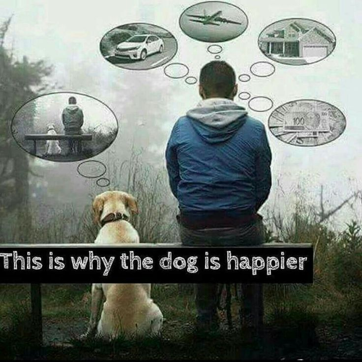 This is why dogs are happier...