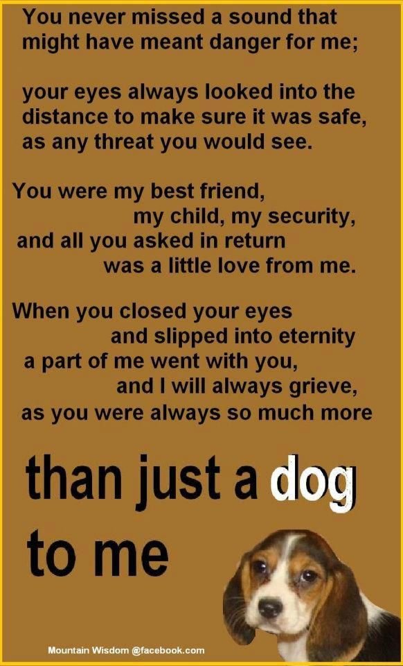 You were more than just a dog to me .....I miss u so much