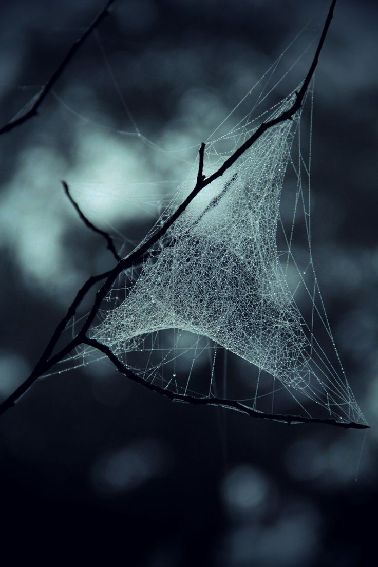 Spooky dew embellished spider web artistry… Mother Nature at her finest.  ~Charlotte (PixieWinksFairyWhispers)