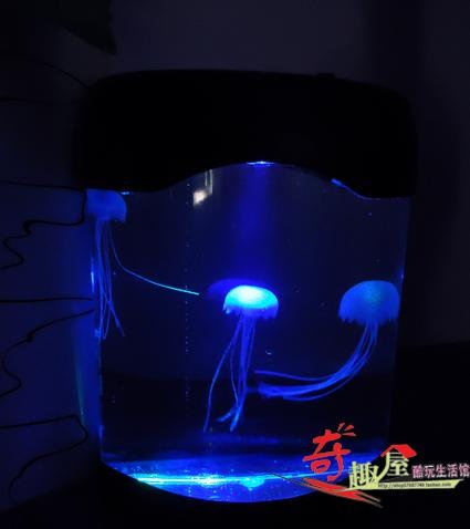 46 best fish tank ideas images on pinterest aquarium for Best light for night fishing