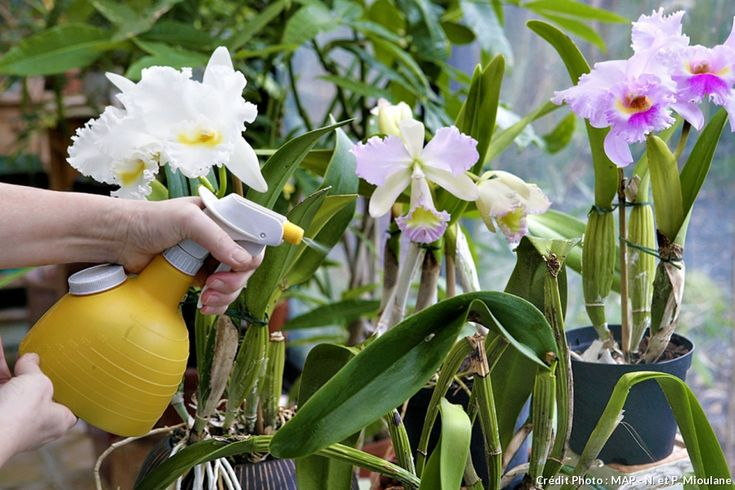 vaporisateur sur orchidées #orchidee #plante #interieur #arrosage #vaporisateur