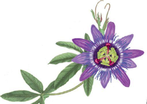 http://www.erbolario.com/linee/33-frutto-della-passione #fruttodellapassione #viola