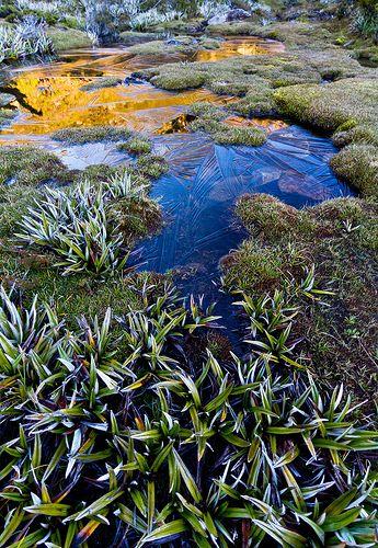 Mt Field National Park - Tasmania   Flickr