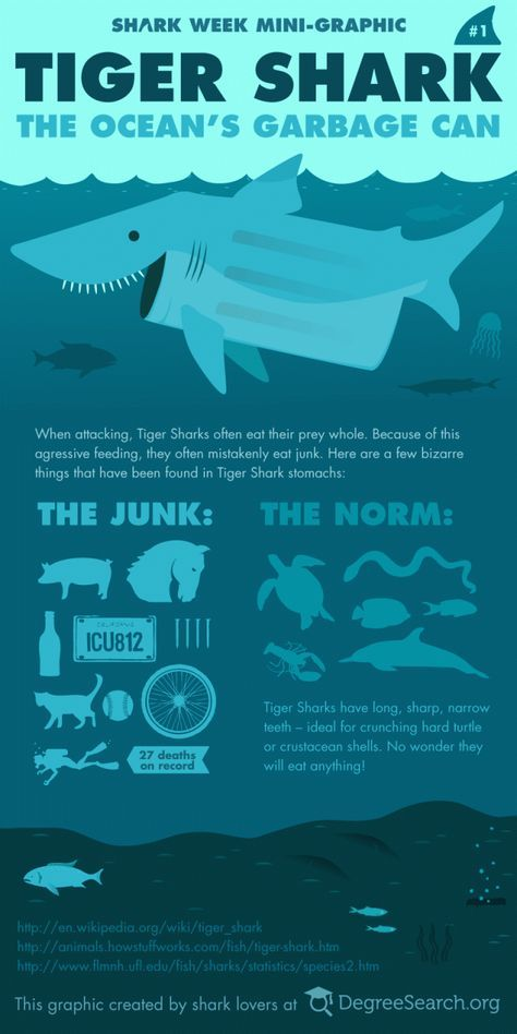 The Garbage Can Of The Sea Top 10 Fun Facts About Tiger Sharks