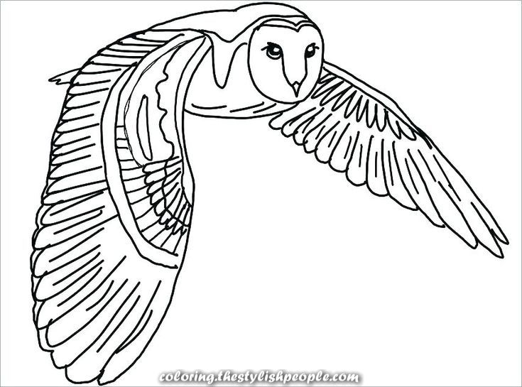 Incredible Cool Owl Coloring Pages Concepts Coloring Concepts