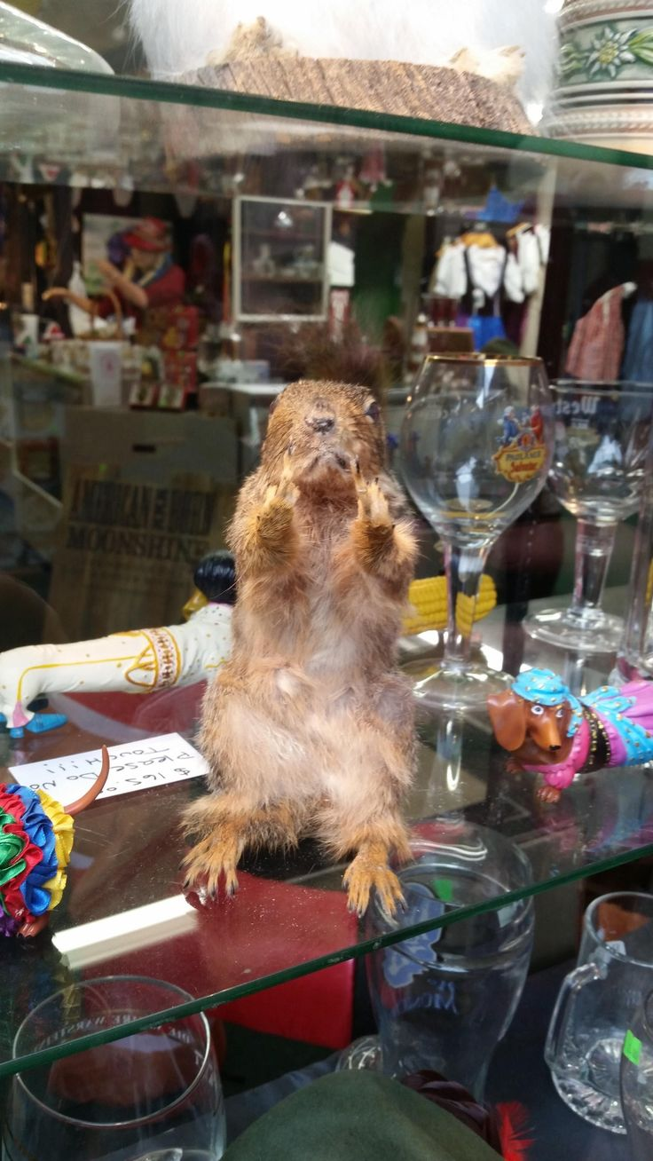 This Taxidermy Squirrel Flicking You Off