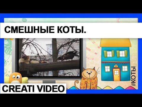 Видео-клип Коты и вороны. Серия 16. #Видеоклип Вороны и коты