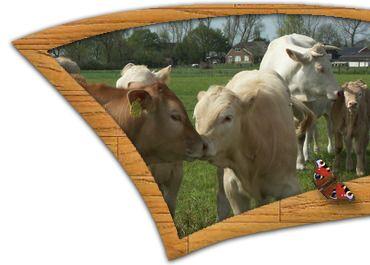 Biologisch rundvlees van Ko-Kalf - biologisch rundvlees, bio rundvlees, scharrelvlees, biologisch rundvlees, geurstoffen, biovlees, ECO kroket, ECO kroketten, EKO kroket, EKO kroketten, Ko-Kalf kroket