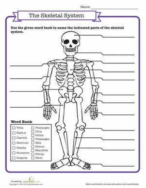 Printables Human Skeleton Worksheet Grade4 1000 ideas about skeletal system activities on pinterest human body systems and systems