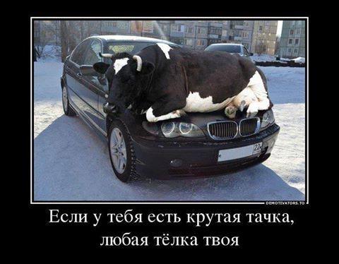 Жизненные басенки))