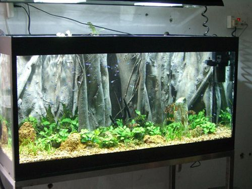 AquaScapeOnline We sell a wide selection of piranhas, stingrays, cichlids, plecos, catfish and rare oddball tropical fish.