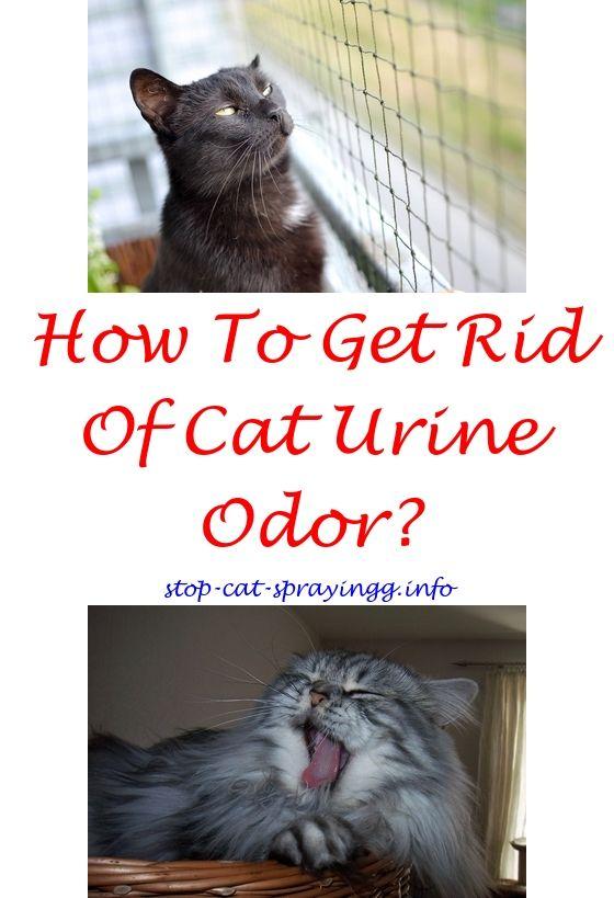 Anti Cat Pee Spray Male Cat Spraying Cat Urine Cat Urine Smells