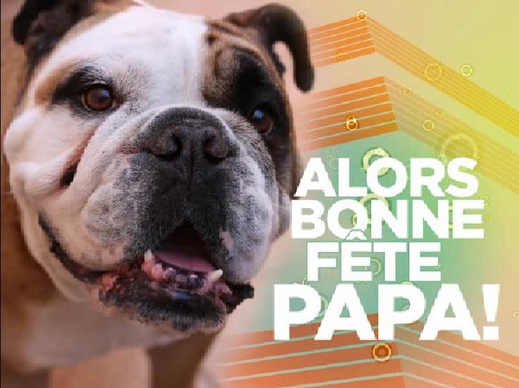 A l'aide de ce beau bouledogue, fêtez une bonne fête des Pères à votre Papa ! C'est par ici http://www.starbox.com/carte-virtuelle/carte-fete-des-peres/carte-fete-des-peres-chien