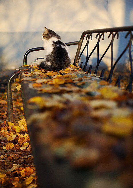 FacebookPhotos, Fall Leaves, Kitty Cat, Parks Benches, Autumn Leaves, Seasons, Funny Pictures, Falltime, Fall Time