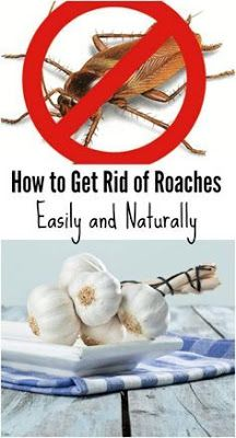 How to Get Rid of Roaches Easily and Naturally