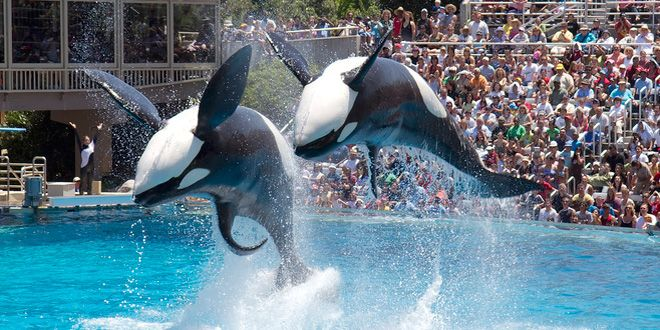 Proposed California Law Would Free SeaWorld's Orcas - Wired Science