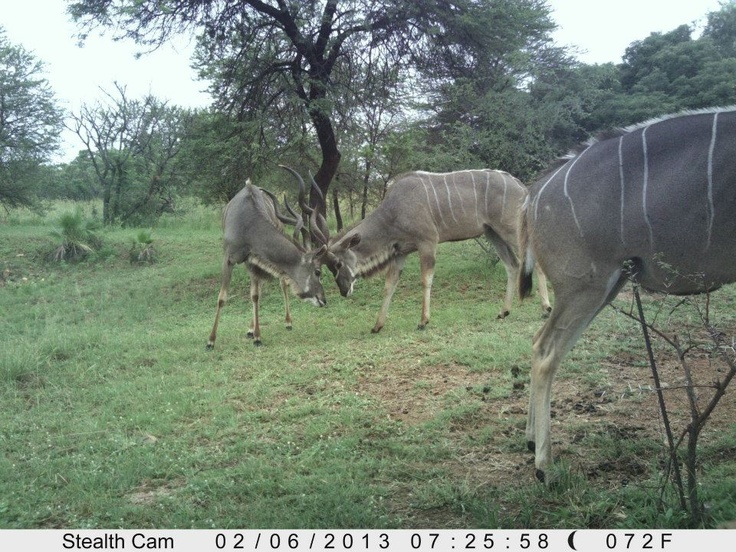 Sighting from Dinokeng Game Reserve