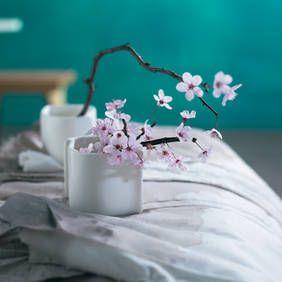 Schon ein paar Sonnenstrahlen genügen, damit sie ihre zarten Blüten präsentieren. Im warmen Haus verbreiten Zweige von Pflaume, Kirsche und Apfel einen Hauch von Frühling. Wir haben Wissenswertes über die grazilen Zweige für Sie zusammengestellt.