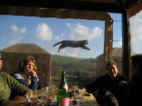 Hilarious Animal Photobombs (35 Photos) | FunCageFly Cat, Photos Bombs, Funny Animal Pics, Funny Pictures, Hilarious Animal, Animal Photobomb, Kitty, Animal Photos, Cat Photos