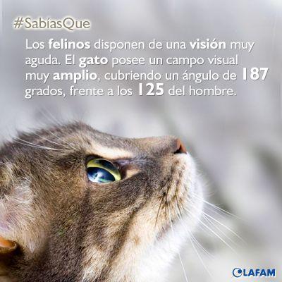 #Gatos #Visión