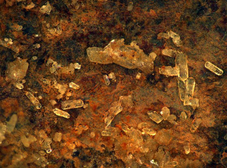 Agricolaite, K4(UO2)(CO3)3, Jáchymov, Jáchymov District, Krušné Hory Mts, Karlovy Vary Region, Bohemia, Czech Republic. Yellow crystals of Agricolaite. Dimension area mm. 2,3 x 2.3. Photo Germano Fretti, collection Luigi Chiappino