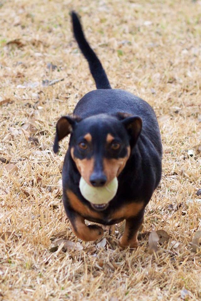 Adopt Bobby On Pet Adoption Center Pet Adoption Pets