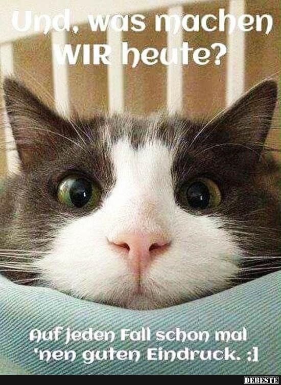 8 besten lustige katzenbilder bilder auf pinterest. Black Bedroom Furniture Sets. Home Design Ideas