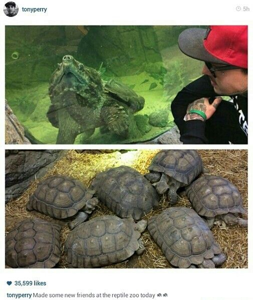 TONY THE TURTLE IS FRIENDS WITH OTHER TURTLES<<<<<<I'm so glad he's a social turtle