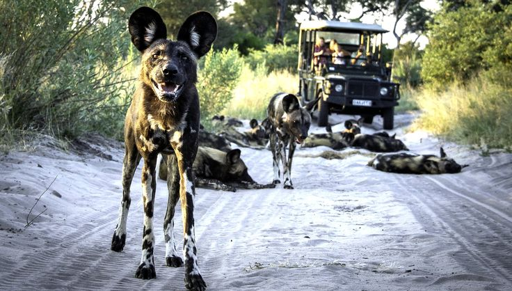 The Best Botswana Safaris Tailormade for you by Taga Safaris - The Experts in African Travel