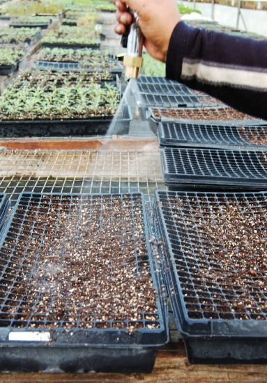 Seed-starting secrets of a greenhouse professional