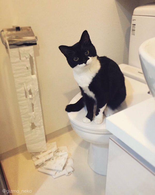 ギズモさん@写真集発売中 @gizmo_neko  1月8日 トイレのドアを開けた瞬間 崩れ落ちる飼い主