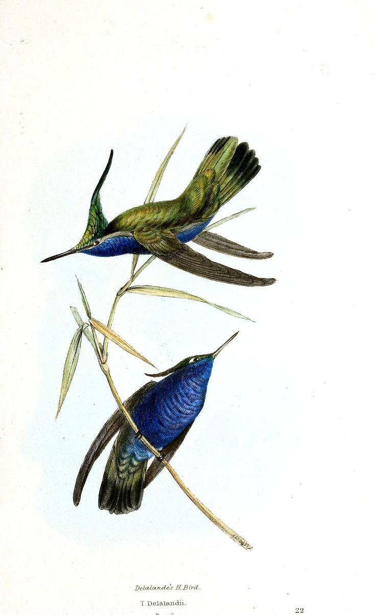 Hummingbird And Honeysuckle Tattoo And honeysuckle tattoo