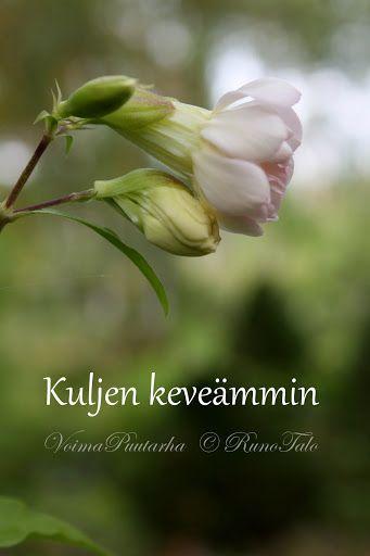 voimakortti Kuljen keveämmin / Ole Onnellinen voimakorttipakka