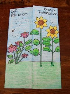 The Inspired Classroom - great science foldables for weather and plants units