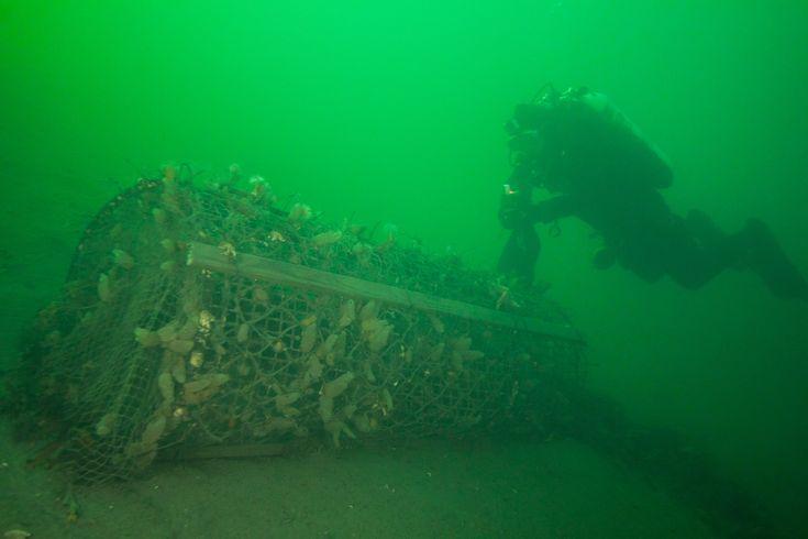 Clearing away some underwater ghost fishing equipment. Moss Undervannsklubb by help of Sparebankstiftelsen DnB ©Petter F. Schmedling www.krakefoto.no