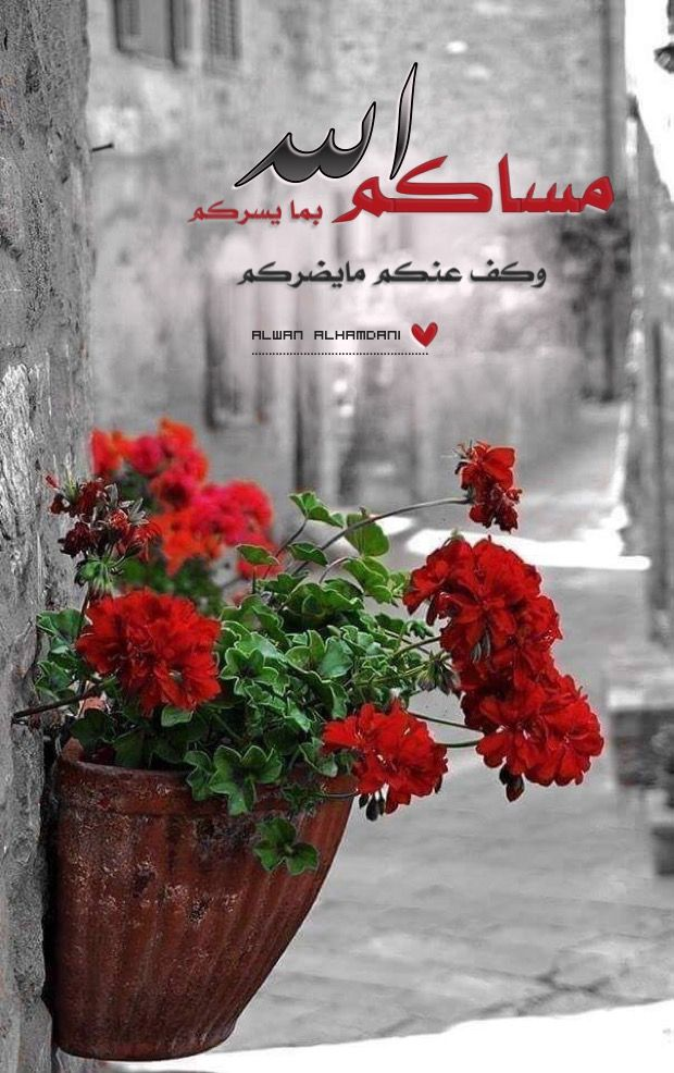 Pin By Alwan Alhamdani On مساء الخير Good Evening Flower Wallpaper Good Morning