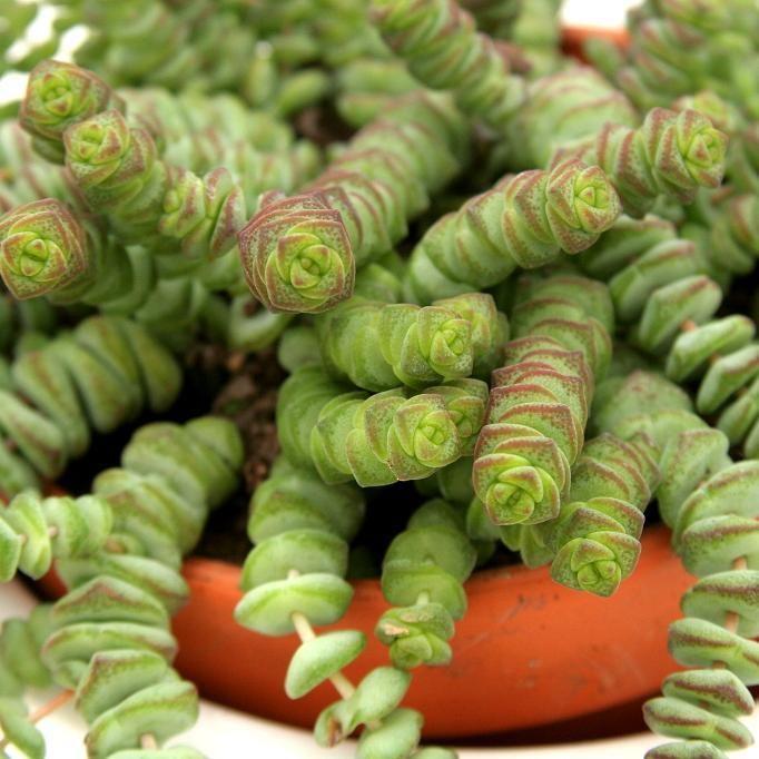 119 best Plantes, Jardin et autres images on Pinterest Creative - mini jardin japonais d interieur
