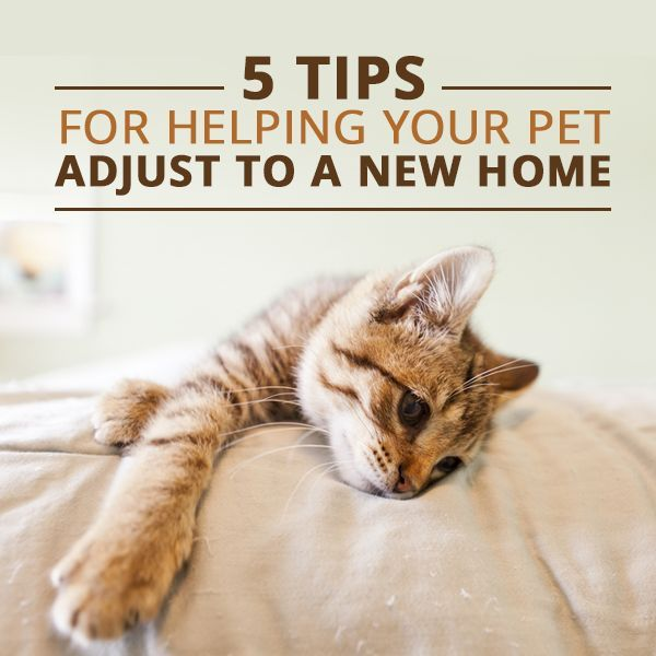 how to find a pet a new home