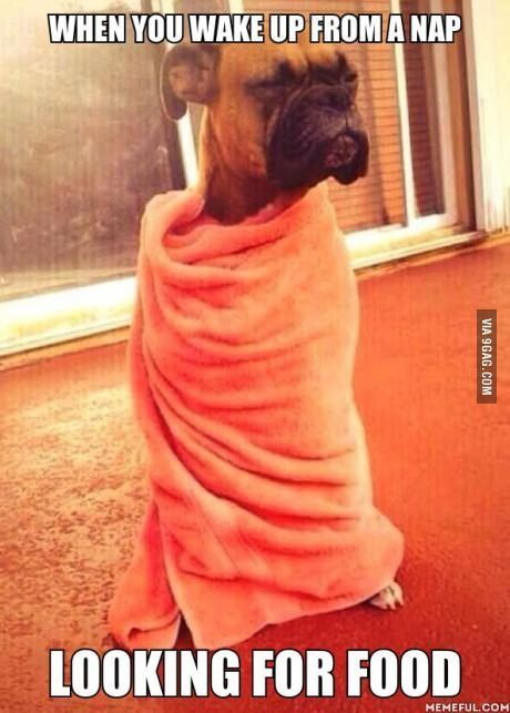 When you wake up from a nap looking for food