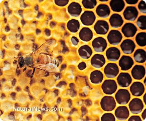 Right now, the world faces the dangers of a new class of insecticides known as neonicotinoids. These insecticides, similar to DDT, have been licensed and unleashed widespread before proper ecological safety testing. http://www.naturalnews.com/041626_neonicotinoids_DDT_environmental_destruction.html#ixzz2by4SKZ8u
