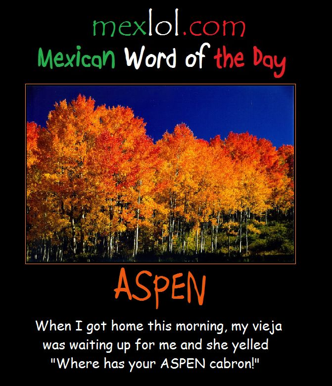 mexican word of the day pictures | Mexican Word of the Day: Aspen