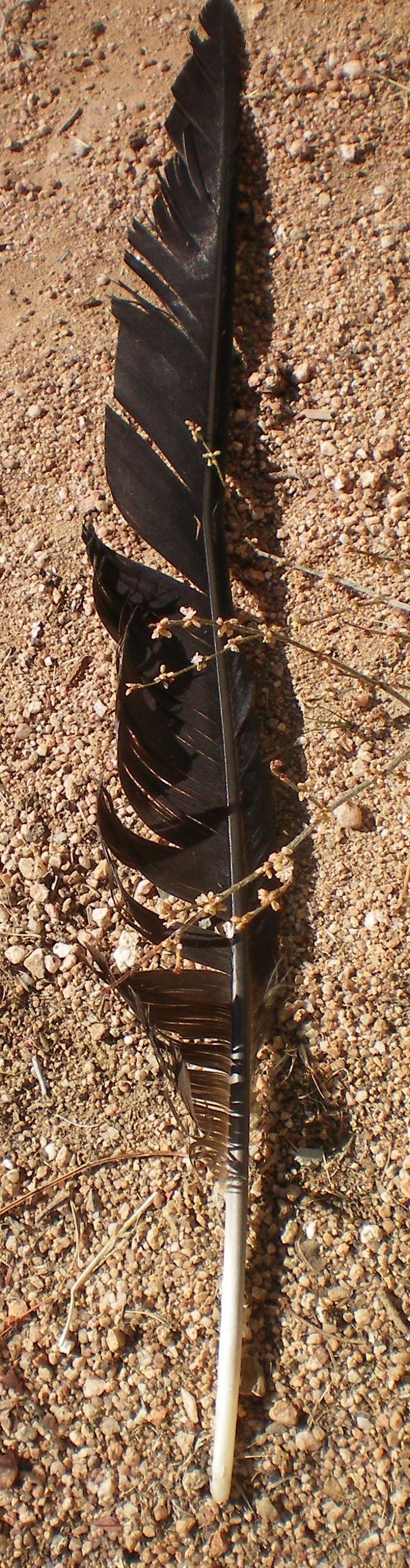 Desert Feather