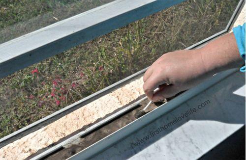 Puede que los cristales de tus ventanas luzcan cristalinos y relucientes, y que casi puedas presumir de ellos, pero ¿en qué estado se encuentran los railes de la ventana?. Polvo, hongos e insectos se dan cita en este maloliente, pequeño y sucio...