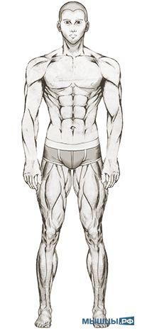 Упражнения для фитнеса и бодибилдинга: техника и советы