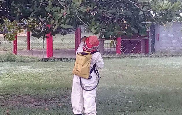 Suspenden clases en escuela de San Bartolo por enjambre de abejas - Panamá América
