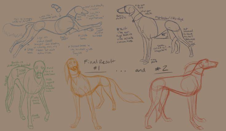saluki anatomical study by crazyk913