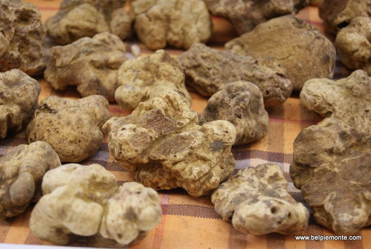 White truffles/Tartufo bianco di Alba - Fiera Internazionale del Tartufo Bianco. It's one of the most expensive and luxurious food.