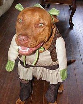 Humorous Halloween Costumes
