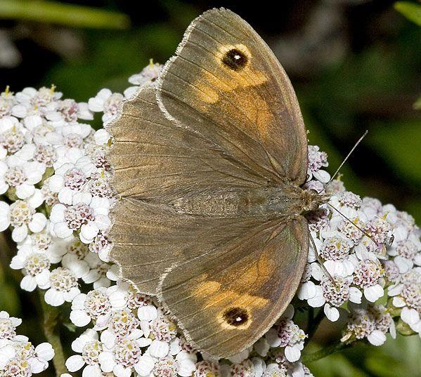 Schmetterlinge Beobachten Natur Entdecken Schmetterling
